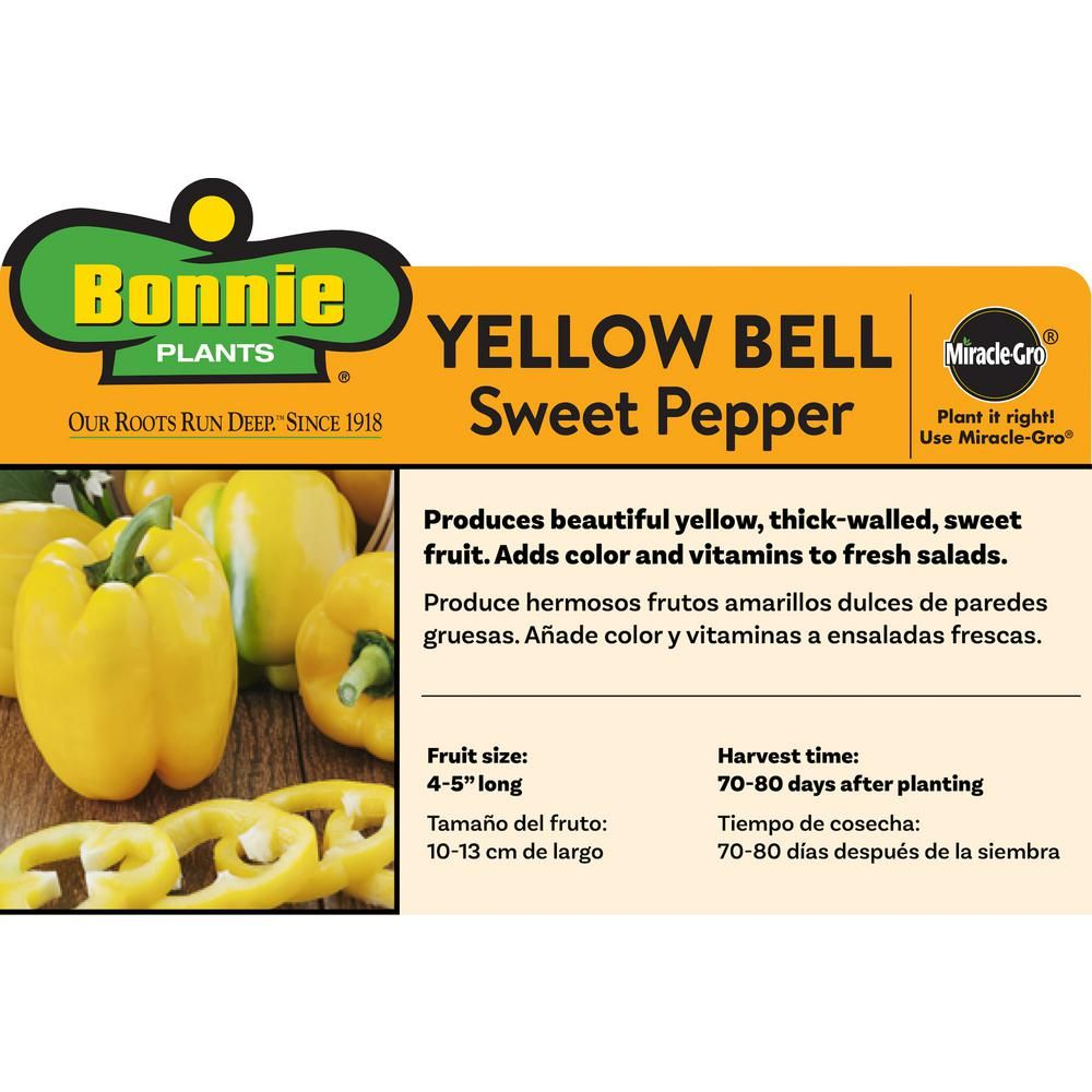 Bonnie Plants 4 5 In 19 3 Oz Pepper Yellow Bell 2102 400 x 300