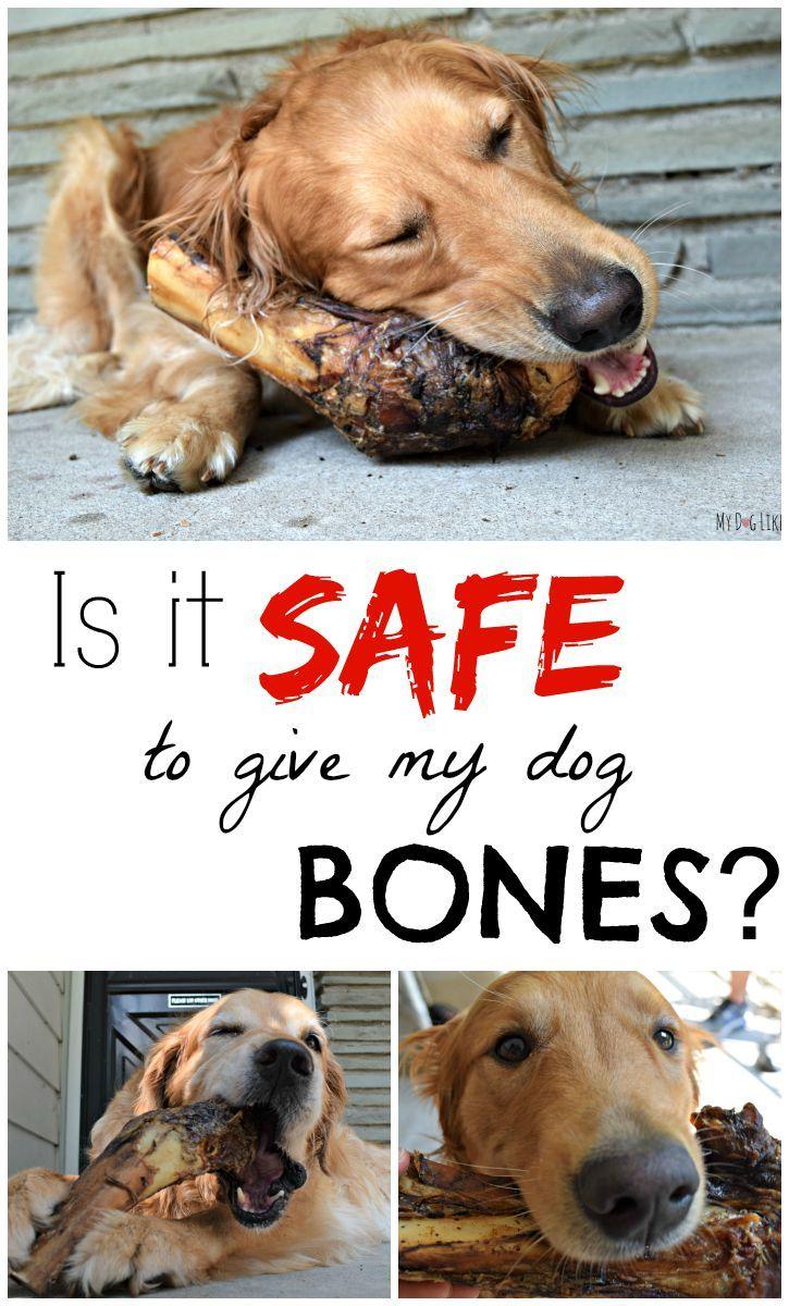 Slammer Time Bone Safety With Jones Natural Chews Dog Health