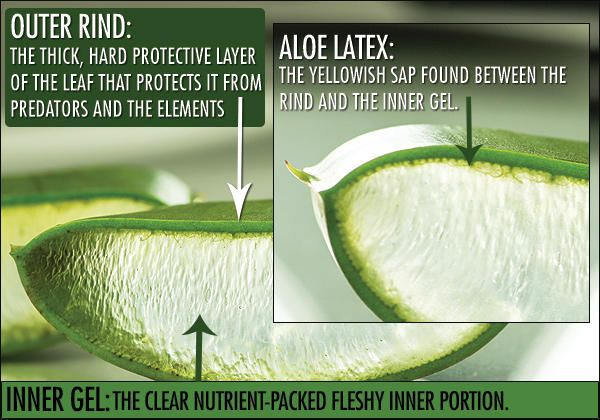 Instead of the clone x gel. Get a aloe vera plant and dip the stem ...
