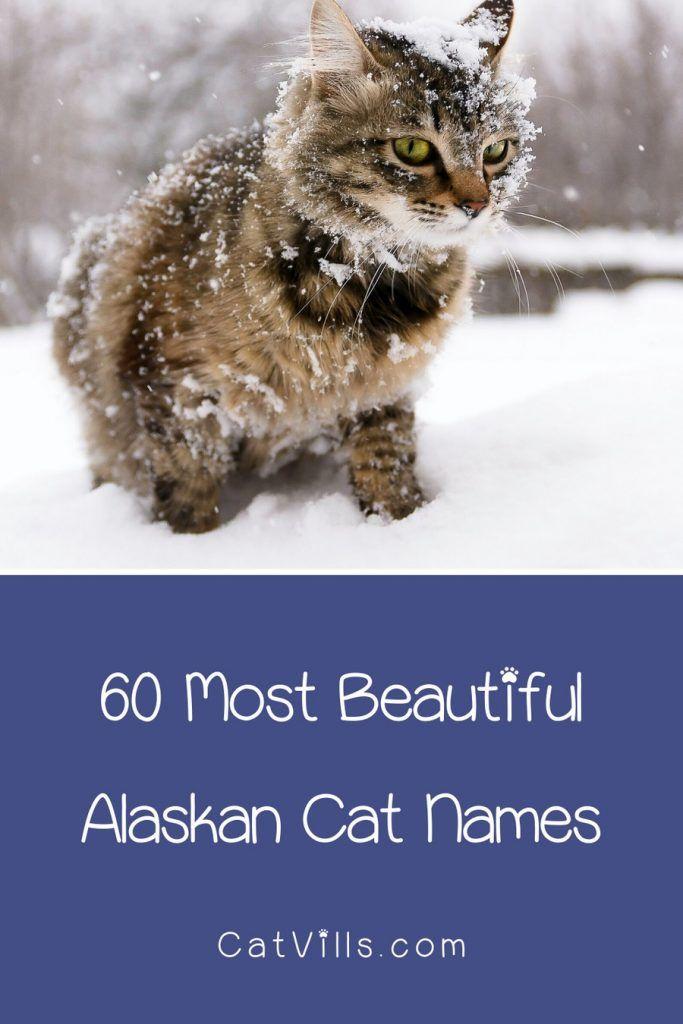 Top 60 Most Beautiful Alaskan Cat Names You've Ever Heard