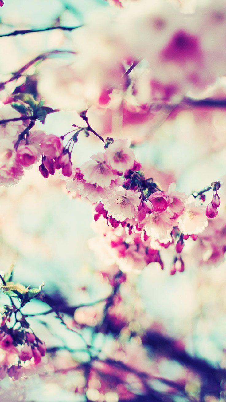 49dbf62b1f Pin by Chiara Colon on Wallpapers   Cherry blossom wallpaper, Spring  wallpaper, Flower wallpaper