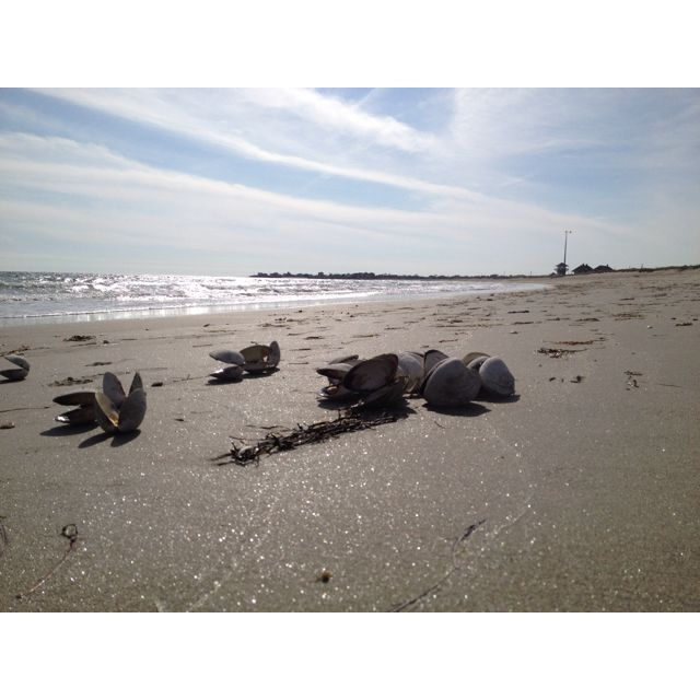Rhode Island Beaches: Rhode Island Beaches, So Good. (With Images)