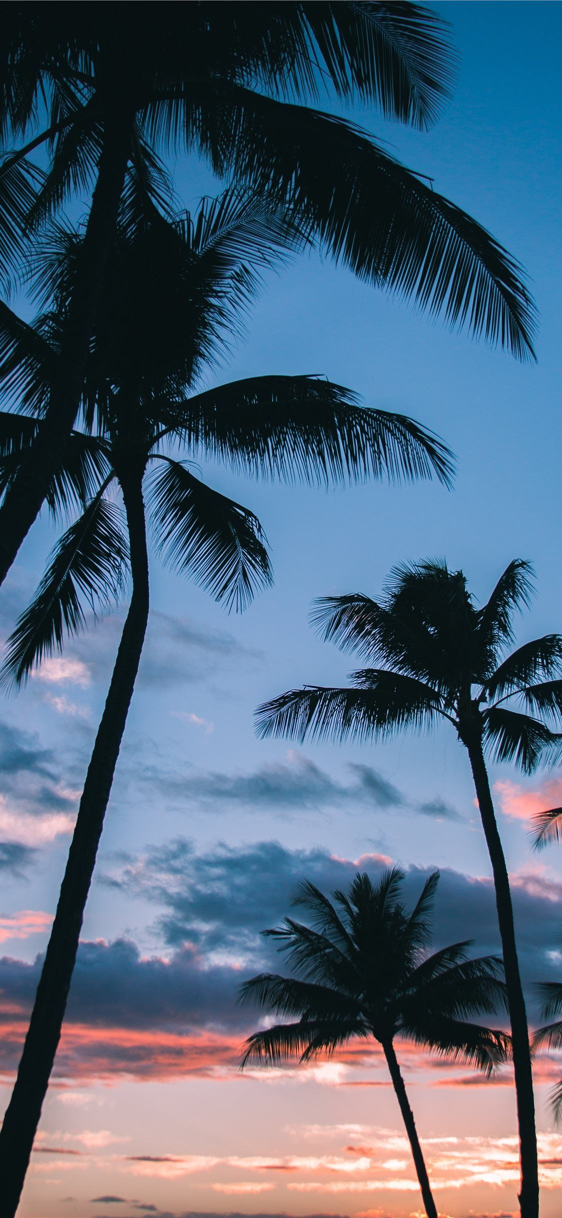 Beach Photography Sunset Palm Trees Digital Download