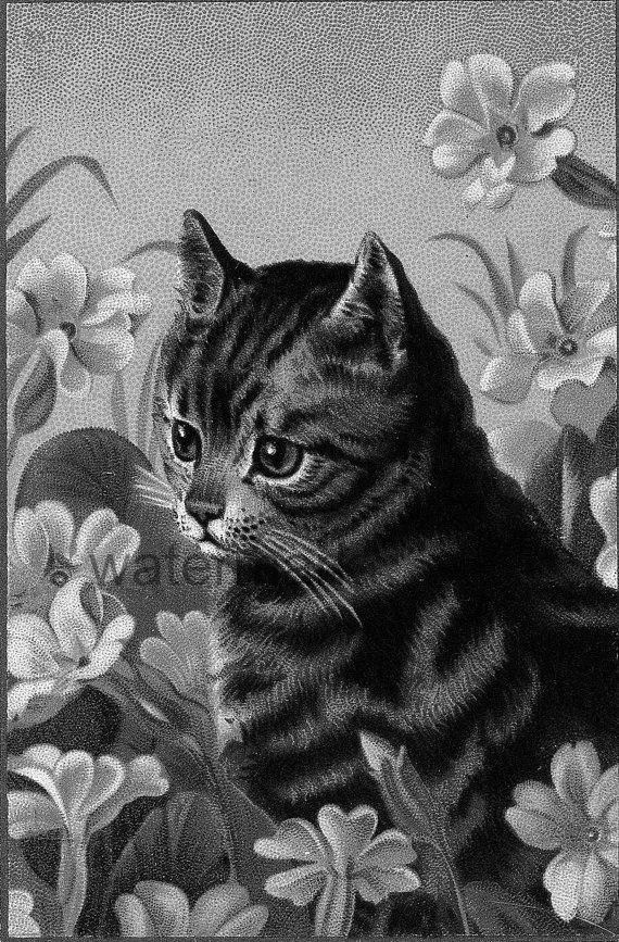 vintage cat kitten flowers grayscale coloring page adult coloring