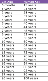 Cat In Human Years Conversion Chart