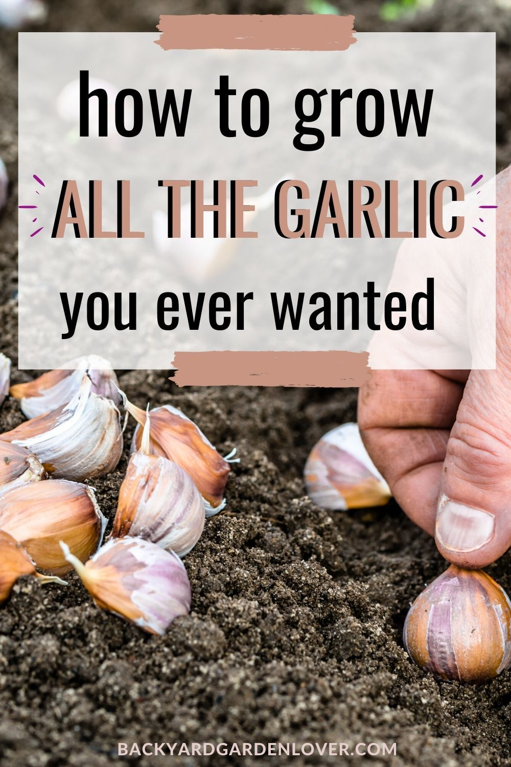 Resistant to disease, and delicious in cooking, garlic is easy to grow and resistant to diseases! See the few things you need to keep in mind when planting garlic and learn how to preserve it for later.  #garlic #howtogrowgarlic #vegetablegarden #gardeningtips #organicgardening #homesteading