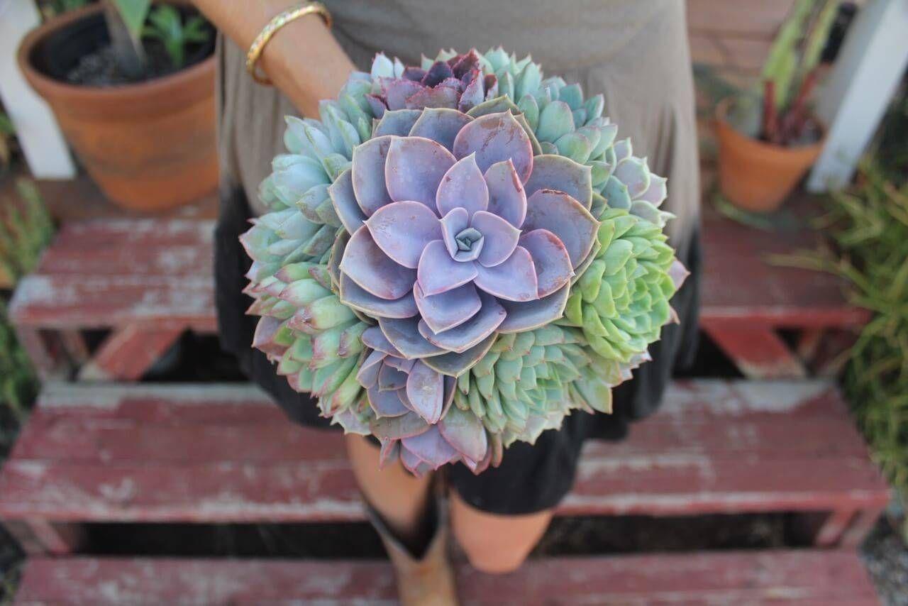 Bridal Succulent Bouquets Crowns Boutonniere Wedding Plantes