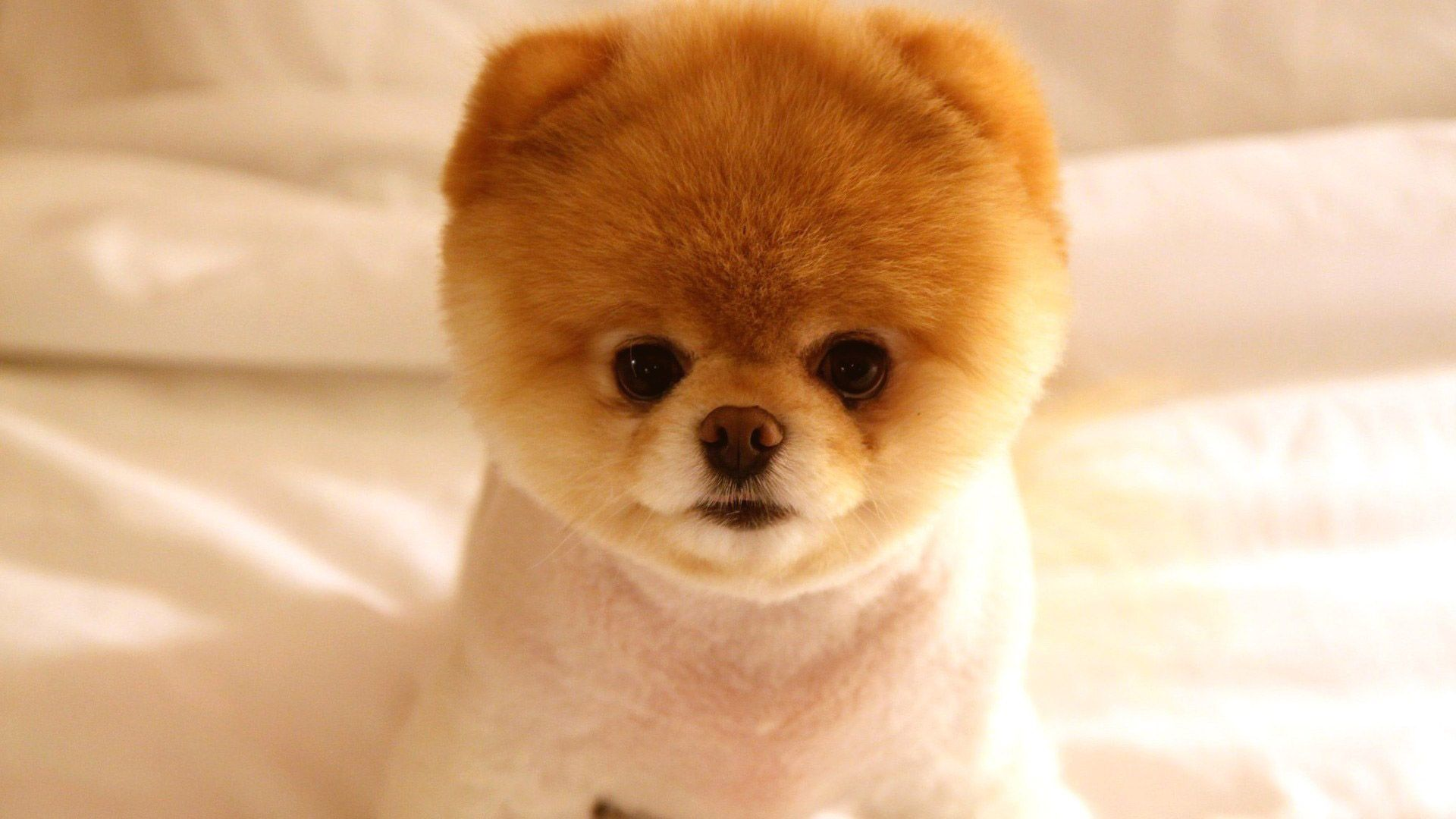 Hd Tiny Dog Pics Cute Dogs Breeds Baby Animals Pictures Cute Animals