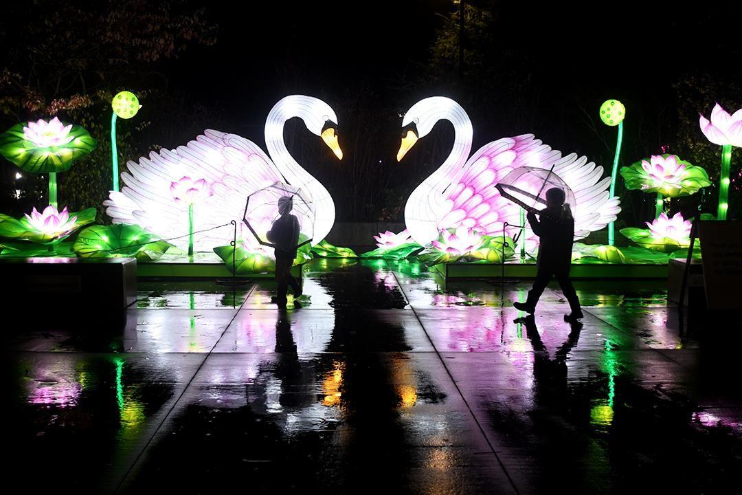 Wildlanterns Lights Up Woodland Park Zoo Woodland Park Woodland Park Zoo Holiday Lights