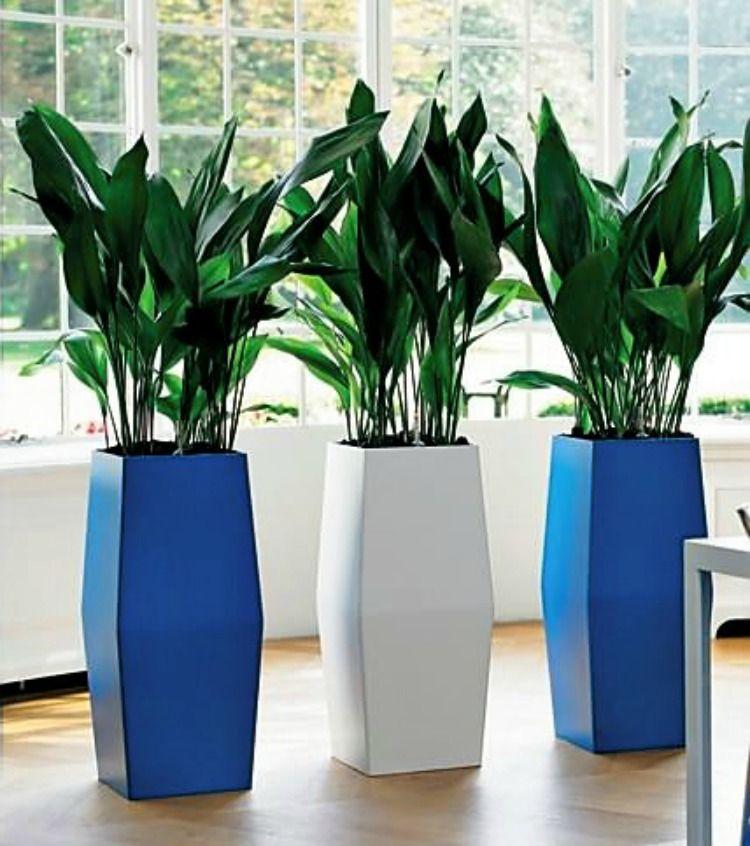 так можно комнатные растения которые любят тень фото того