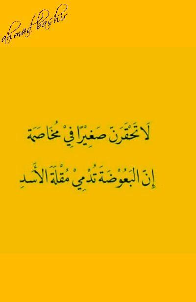 لا تحقرن صغيرا في مخاصمة ان البعوضة تدمي مقلة الاسد Arabic Calligraphy Calligraphy Qoutes