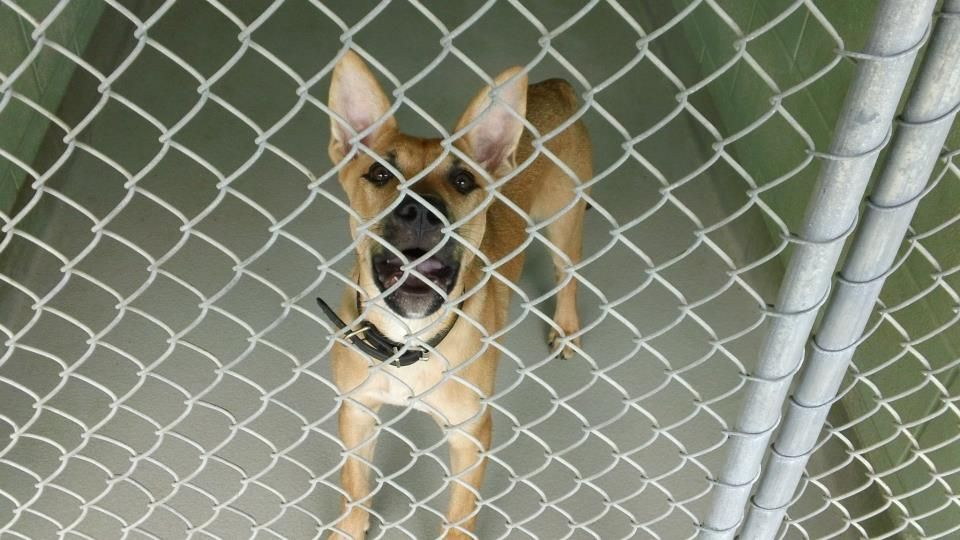 16+ Forsyth county animal control images