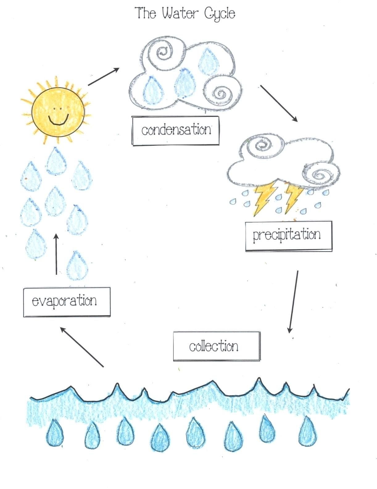 33 Simple Water Cycle Worksheet Design Ygdravil