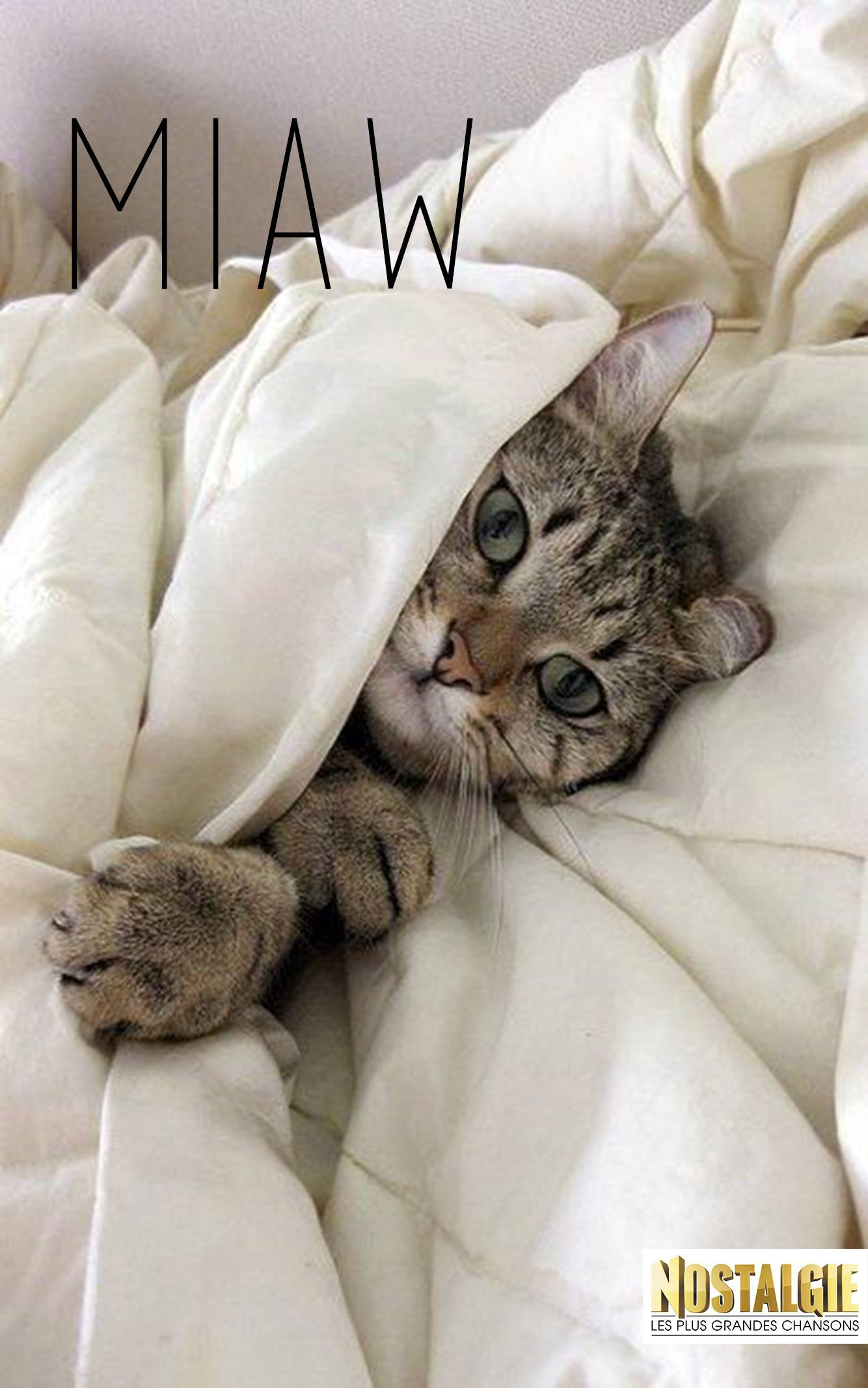 #mayaacra #nostalgieliban #miaw #pet #pets #cute #cat #morning #bonjour
