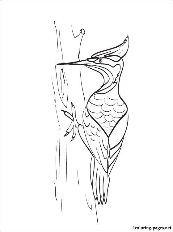 Woodpecker Coloring Page For Free Coloring Pages Stuff For
