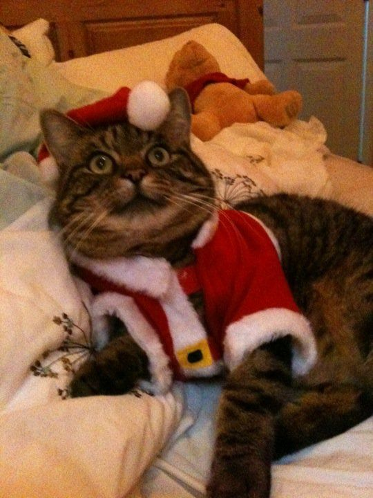 Barnaby\u0027s Santa outfit one of the best things about Christmas