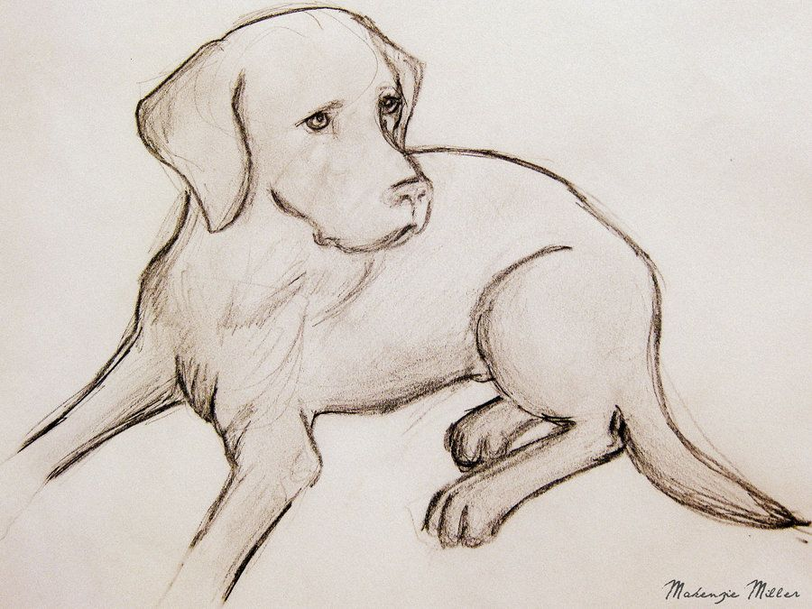 Labrador Drawing By Sweetsurrender13 Dog Sketch Cute Dog
