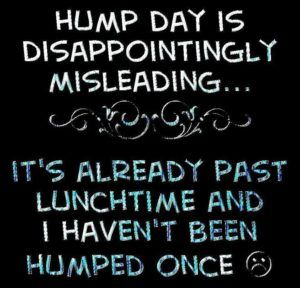 60 Funniest Hump Day Memes To Survive Wednesdays Hump Day Quotes Funny Quotes Hump Day Humor