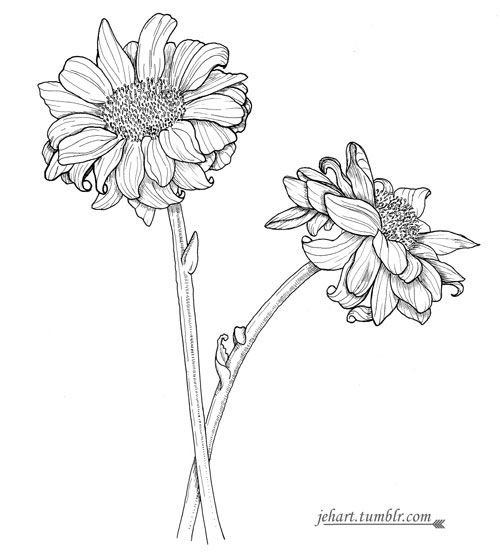 Tumblr N3dal1yR731rzdmg8o1 500 500x559 Flower Drawing TumblrSimple
