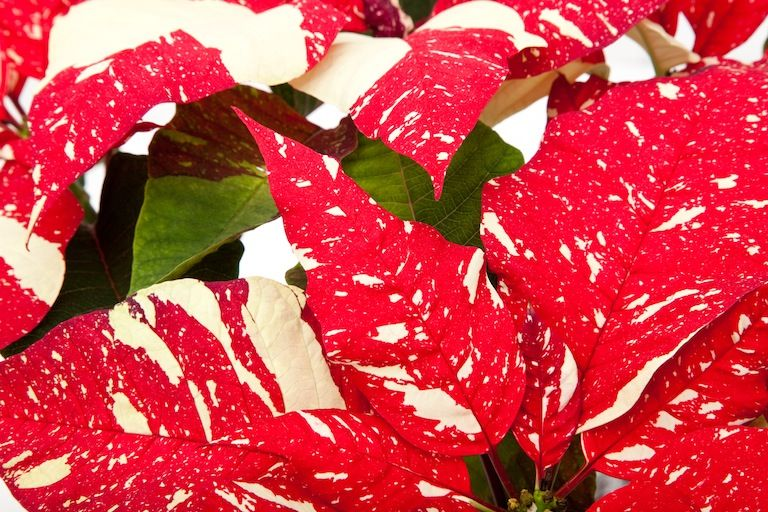 The Jingle Bell Bouquet at From You Flowers Christmas