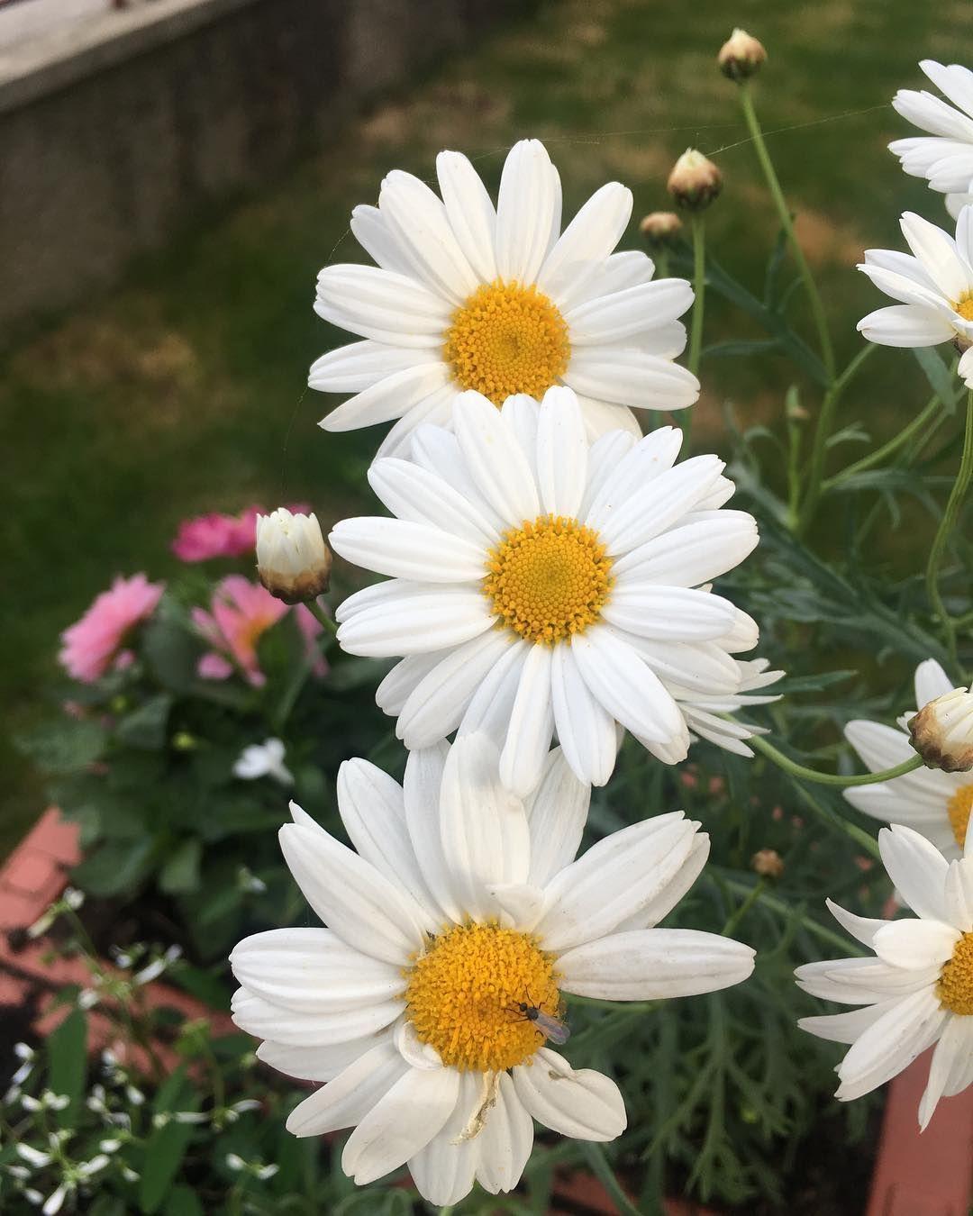 #love#beautiful#garden#flower#flowerpower#prievidza#holiday#positiveenergy#slovakia#dnescestujem#happiness#goodvibes#slovensko#trip#flowers#happy#spring#flowerlover#nature#sunnyday#greenery#loveit#inlove#explore#spring#adventure#perfect#instagood#photooftheday#tbt