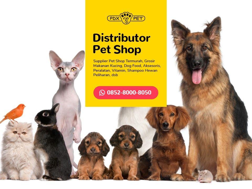Wa 0852 8000 8050 Grosir Hemat Petshop Supplier Cat Food Makanan Anjing Anjing Perlengkapan Anjing