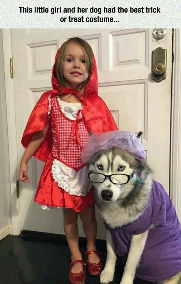 Little Red Riding Hood Costume Dog Halloween Costumes Pet