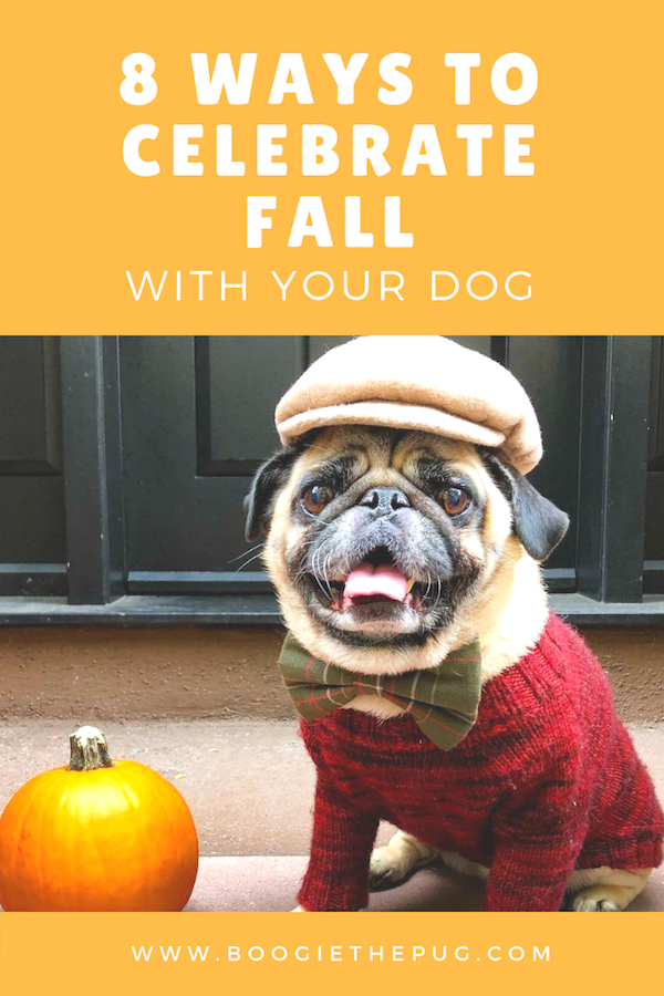 8 Ways To Celebrate Fall With Your Dog Dog Activities Your Dog Fall Dog