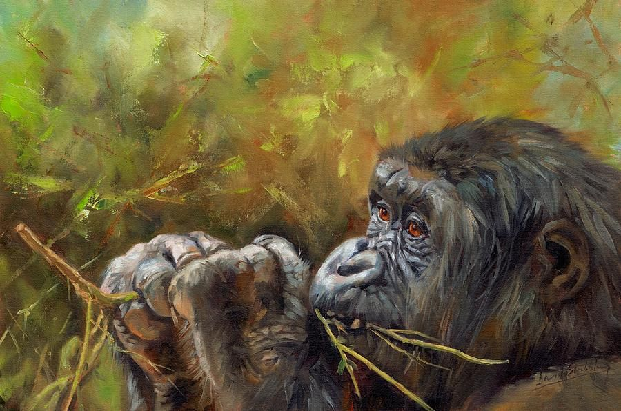 lowlandgorilla2davidstribbling Gorillas art, Animal