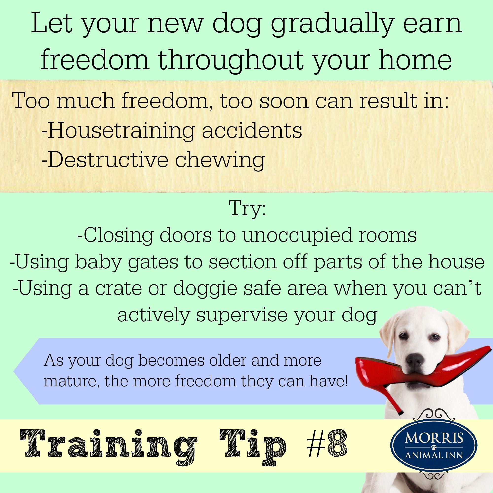 Don T Give Your New Dog Too Much Freedom In Your Home Too Soon Training Dogtraining Newdog Puppy Dog Training Tips House Training Dog Training