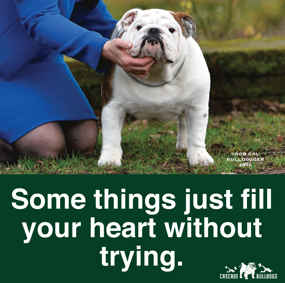 Some Things Just Fill Your Heart Without Trying Bulldog Bulldog Funny Bulldog Puppies