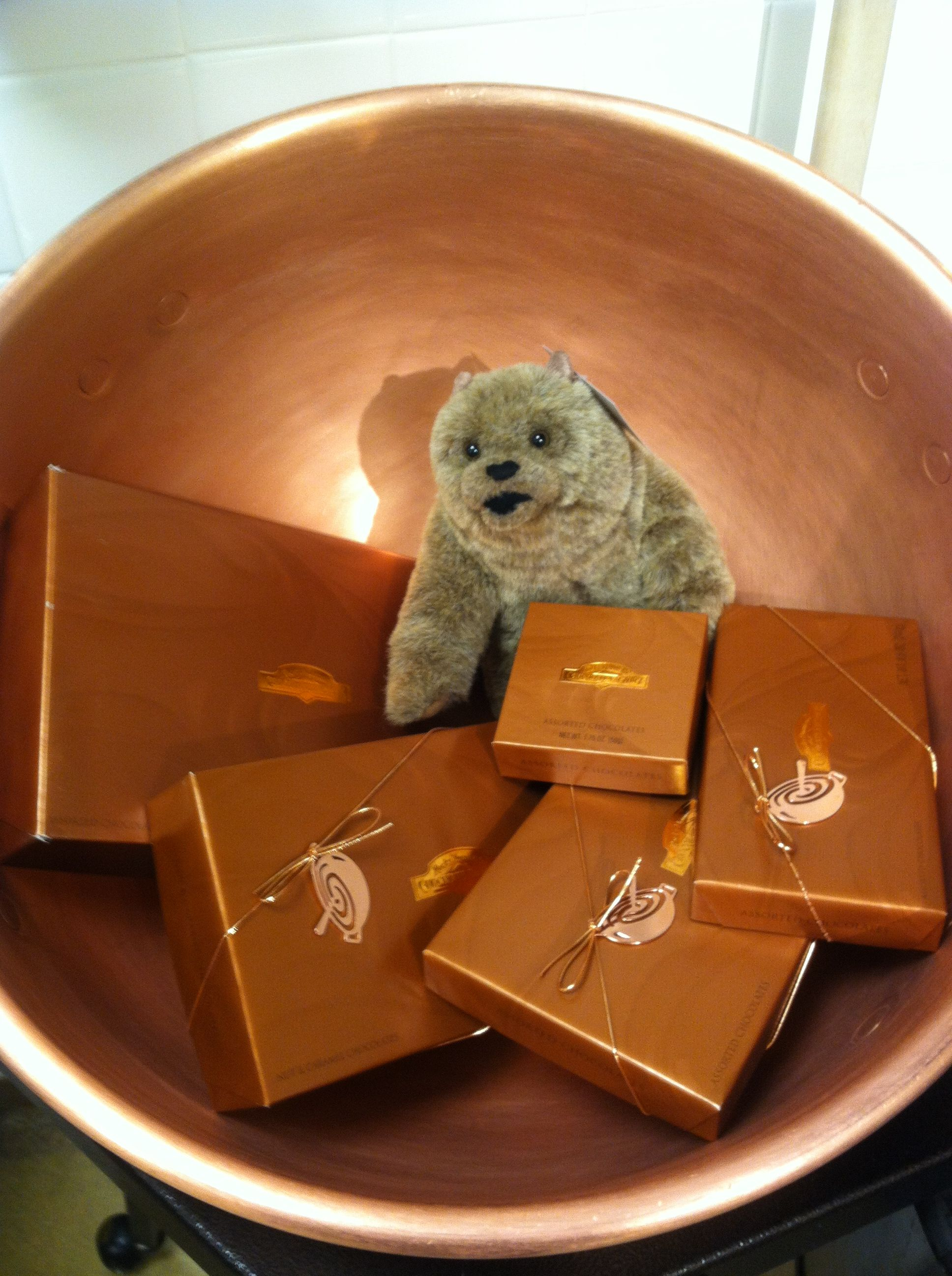 Rocky Mountain Chocolate Factory Baby Truffles the Bear playing in ...