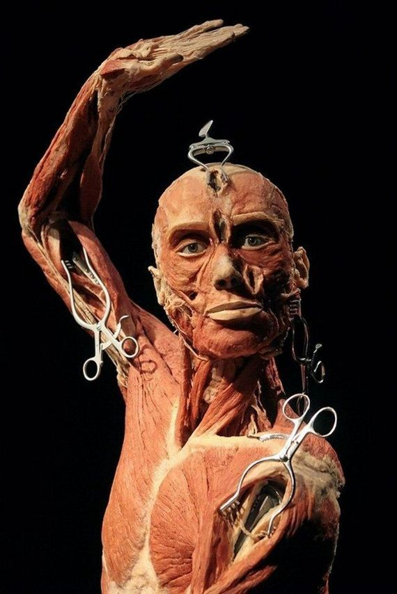 muscle portrait with retractor tools. courtesy of the BODIES ...