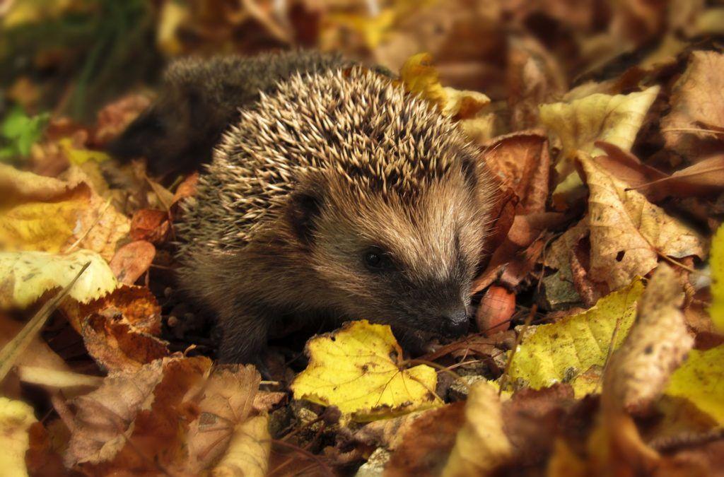 Novembre au jardin : ce qu'il faut faire, planter et ...