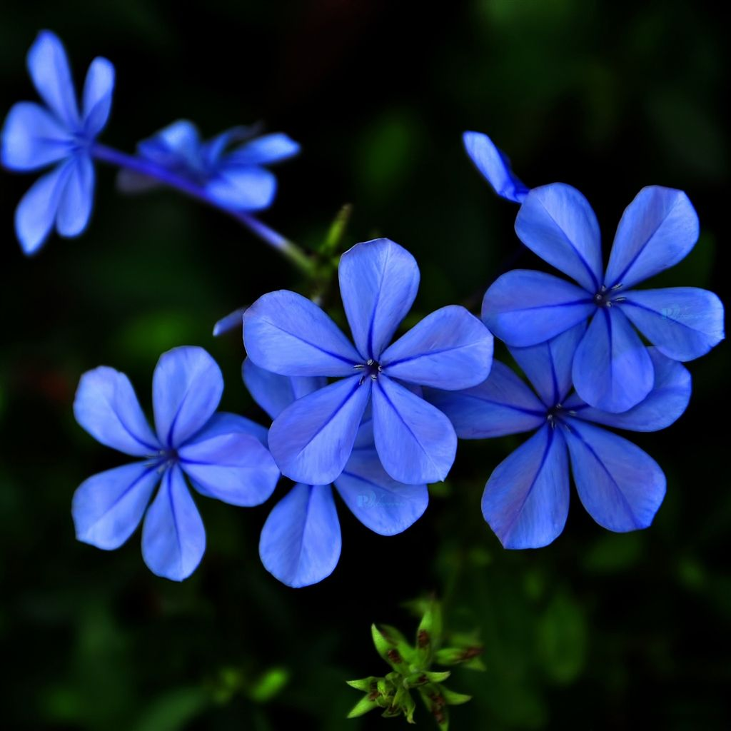 Blue-purple Flowers IPad Air Wallpaper Download