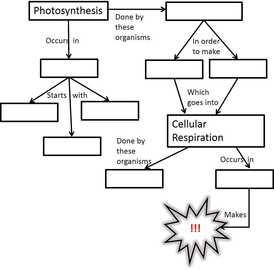 photosynthesis and cellular respiration worksheet Google Search – Cellular Respiration Worksheets