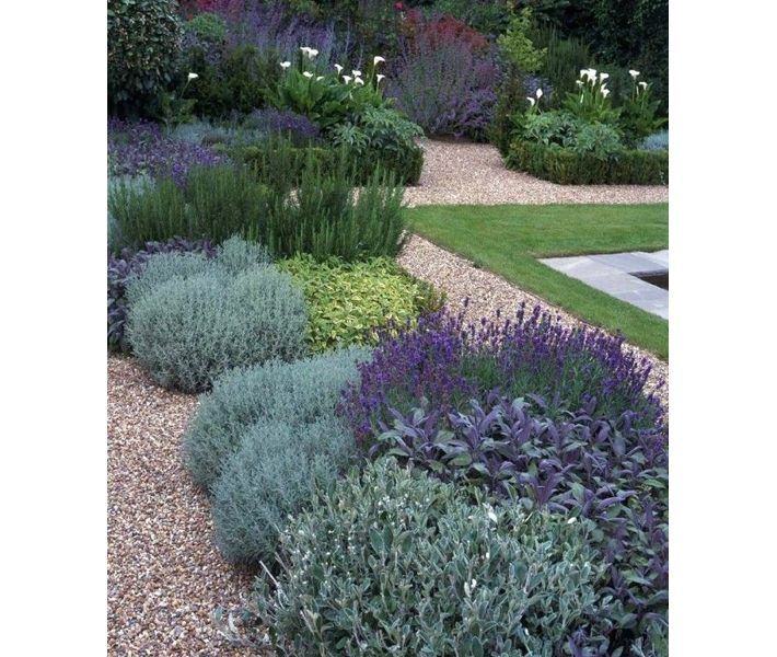 Lavender garden with sage and other greens – Little Blue Dish