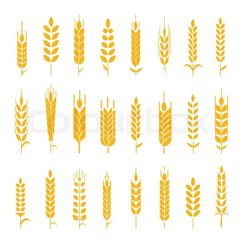 Wheat Ear Google Search Barley Pinterest Product Labels