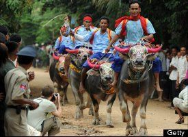 Festival of Death in Cambodia, a 15-day celebration that culminated in water buffalo riding, horse racing and traditional Khmer wrestling in Vihear Suor village about 30 miles from the capital city of Phnom Penh