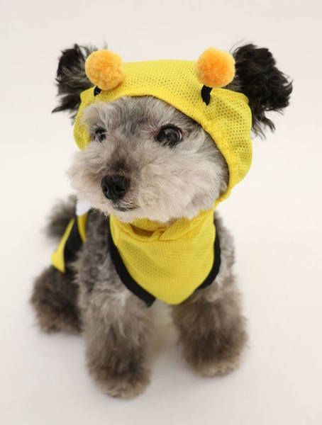 犬のための虫よけ服 蚊やダニから愛犬を守る Brand Topics Fashion Wwd Japan 犬 ダニ 虫
