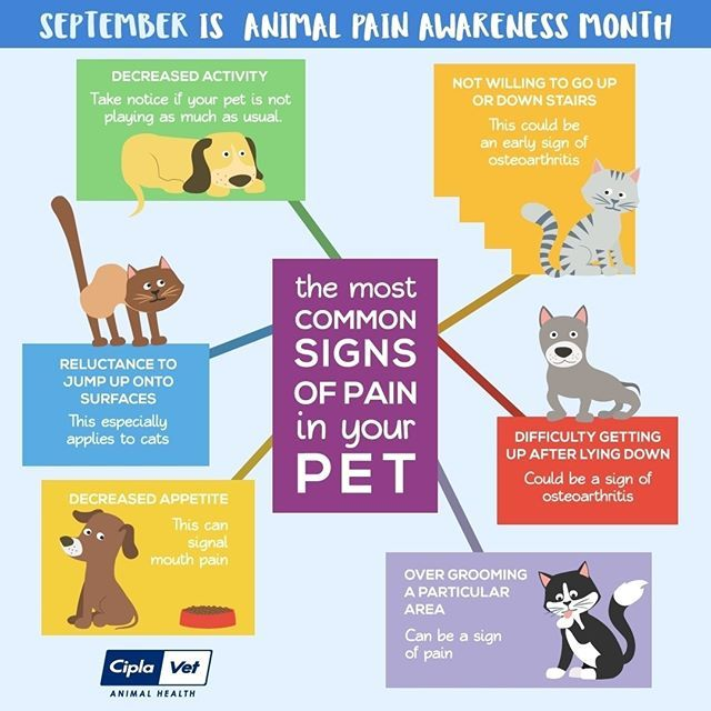 Pin On Vets For Pets