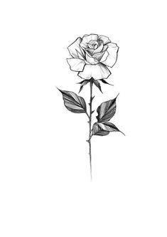 Popular Rose Tattoo Stem Rose And Stem Tattoo Small Rose Tattoo White Rose Tattoos Rose Tattoo Forearm