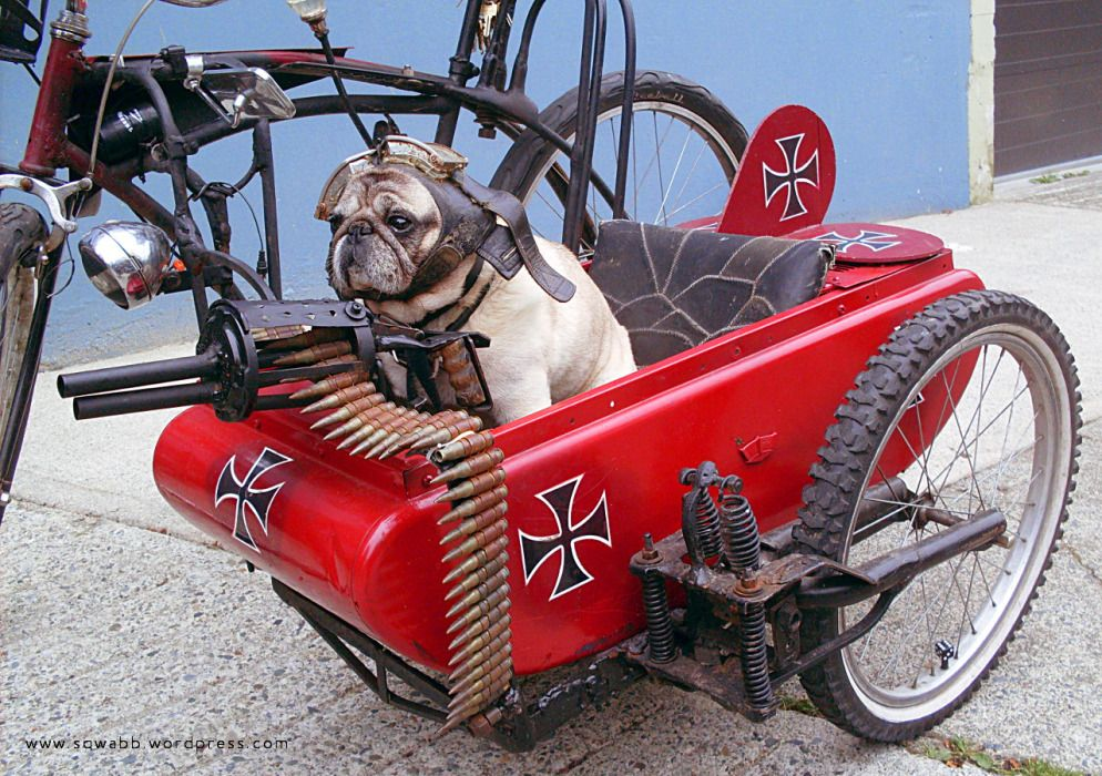 I Surrender That S Too Cool Bicycle Sidecar Sidecar Kids Wagon