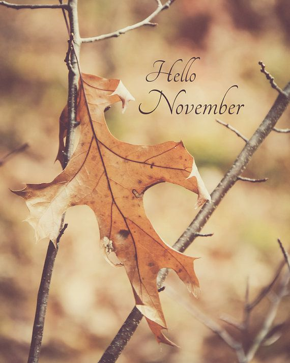 Items similar to November Hello November Woodland Rustic Decor Oak Leaves Brown Sepia Tones New England Autumn Harvest Fall Thanksgiving, Fine Art Print on Etsy