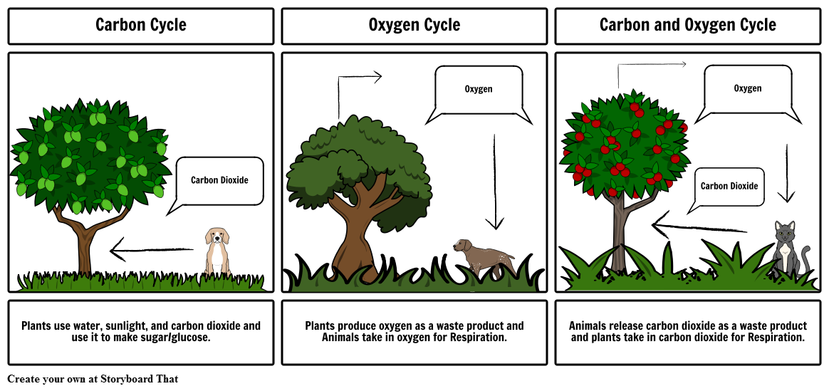 Image Result For Diagram Of How Trees Produce Oxygen
