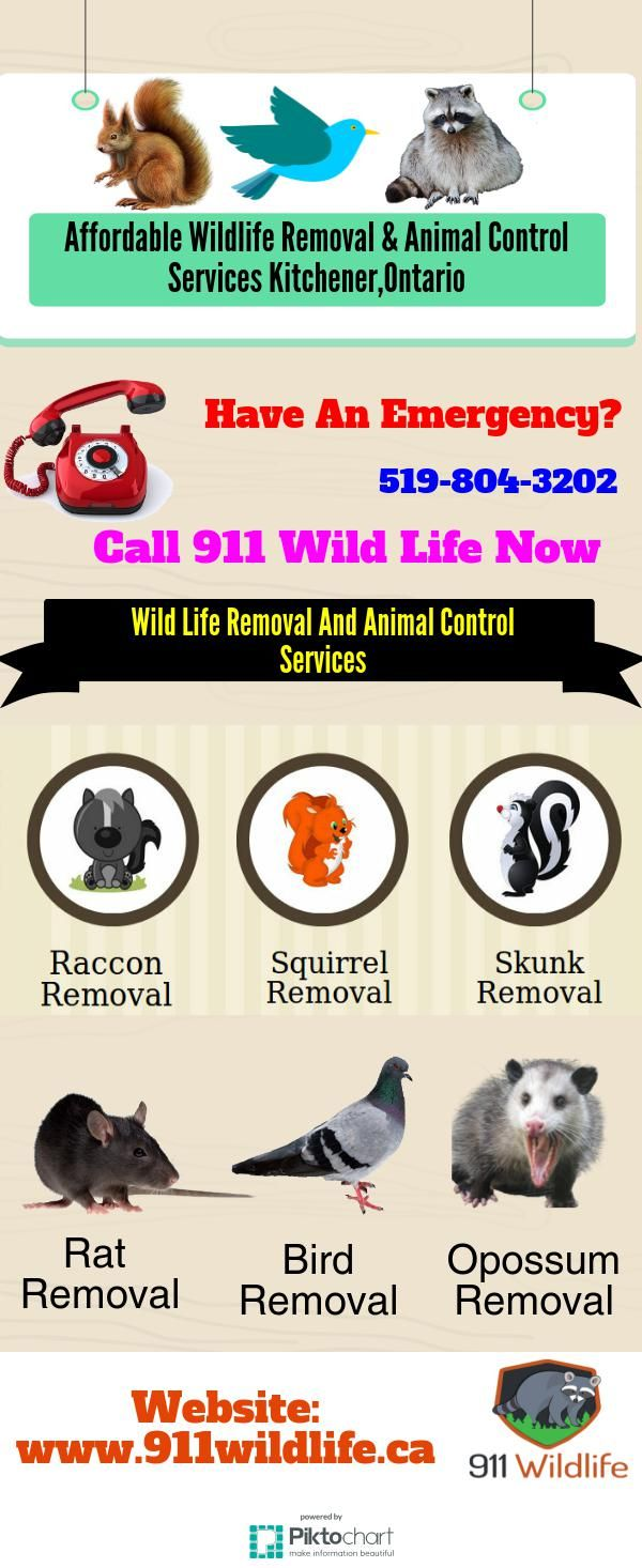 Affordable Wildlife Removal & Animal Control Services-Kitchener ...