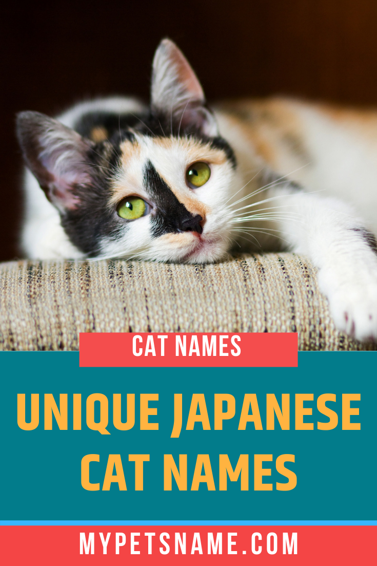 Unique Japanese Cat Names In 2020 Japanese Cat Cat Names Cats