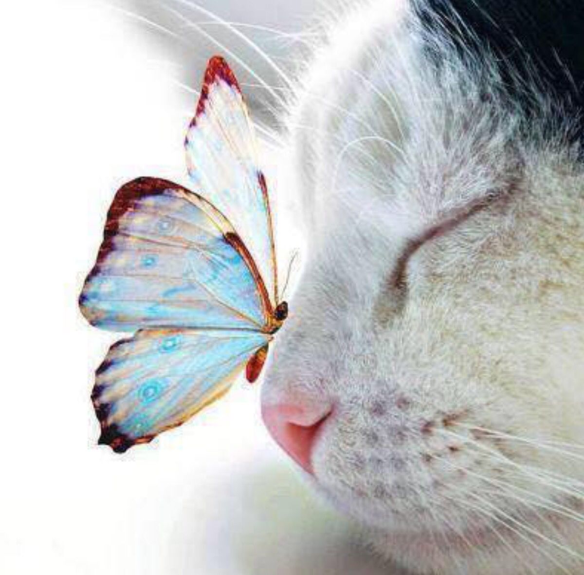 Kitten And Butterfly Cute Animals Animals Pets