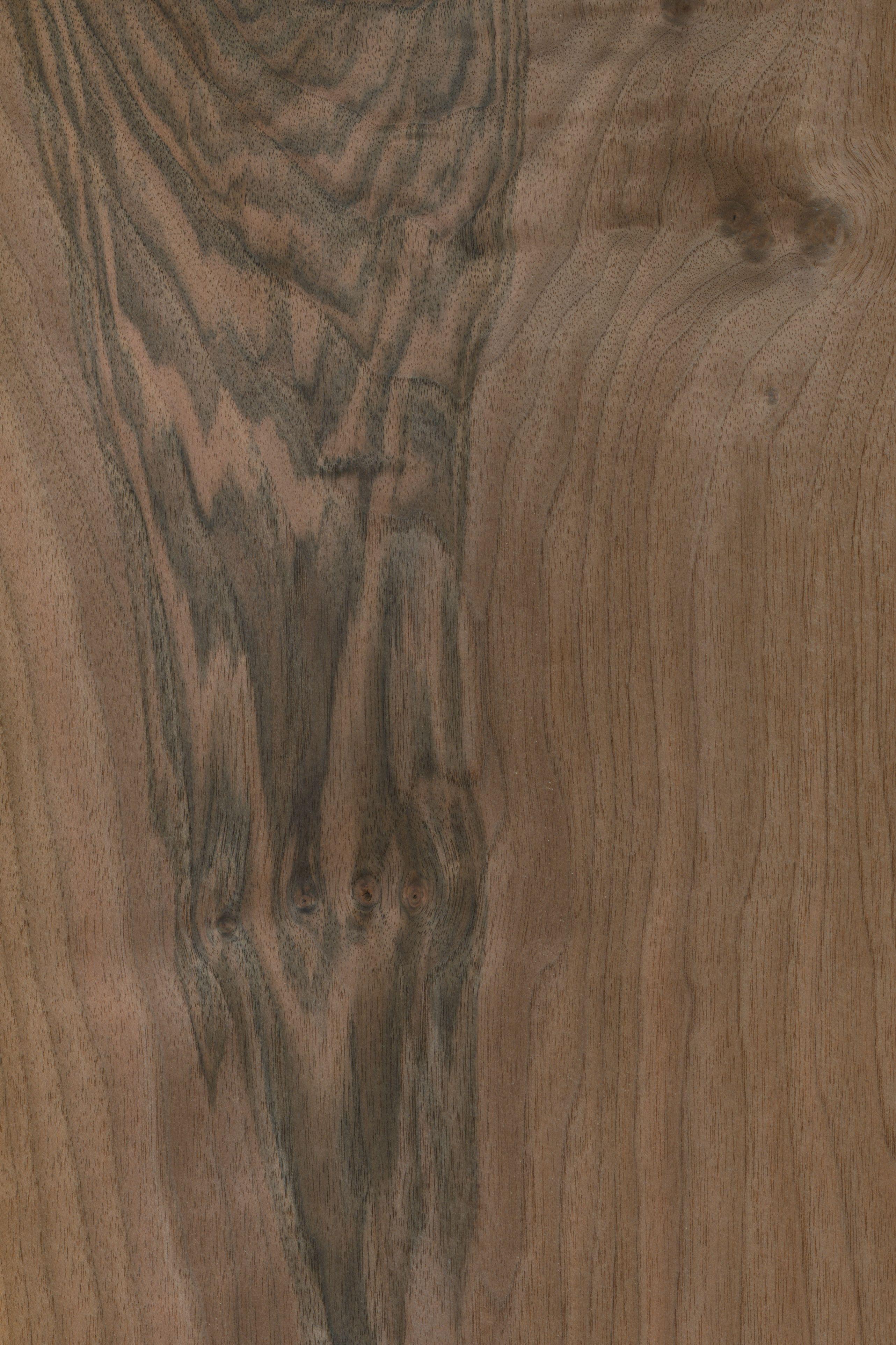Nussbaum europäisch   Furnier: Holzart, Nussbaum, Blatt, braun, dunkel, #Holzarten #Furniere #Holz