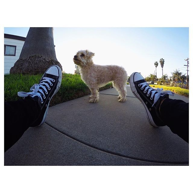 🖤 #gopro #imperialbeach #yorkiepoo #imperialbeachlocals #sandiego #sandiegoconnection #sdlocals #sandiegolocals - posted by   https://www.instagram.com/c__bo. See more post on Imperial Beach at http://imperialbeachlocals.com